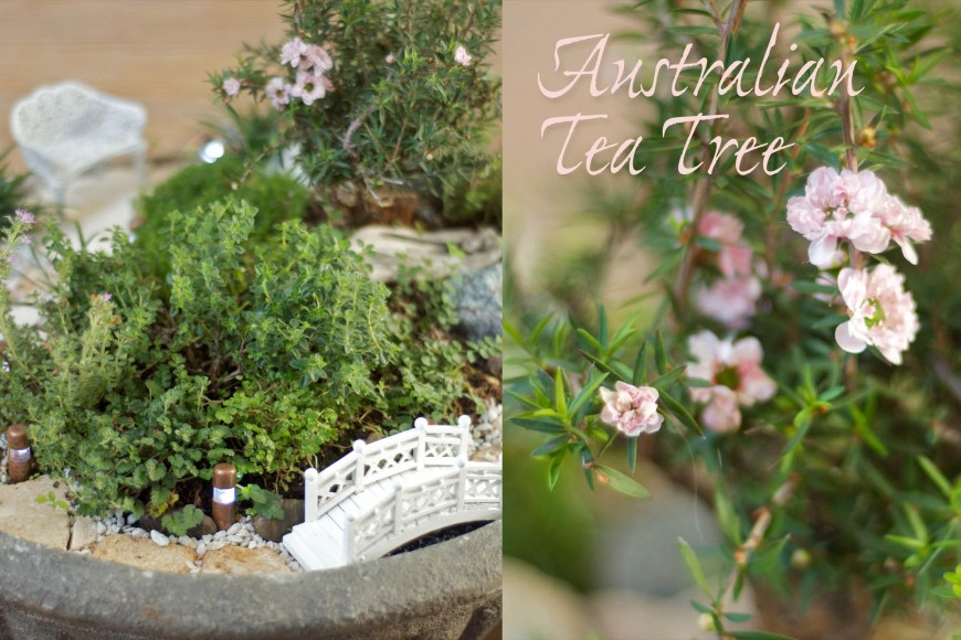 Australian Tea Tree Miniature Fairy Garden | Lush Little Landscapes